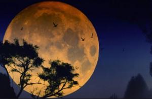 к чему приснилась луна