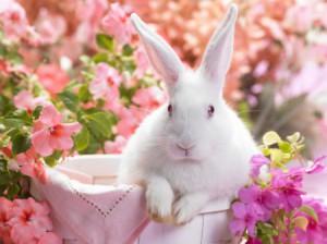 к чему снится белый кролик