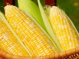 к чему снится кукуруза
