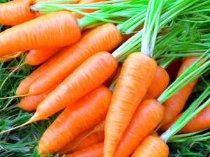 к чему снится морковка