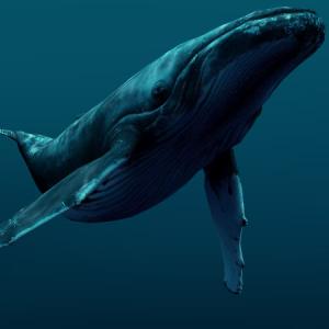 воде в кит к чему снятся чистой