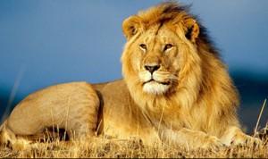 лев сонник
