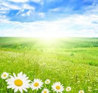 К каким событиям снятся поля. Любимый сонник описывает, к чему снится красивый сон.