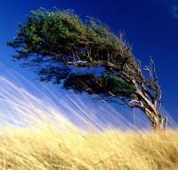 Какие перемены ждут сновидца, которому приснился сильный ветер, к чему снится стихия – ответит сонник.