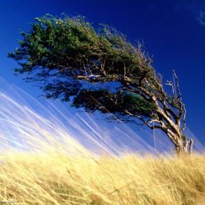 Какие перемены ждут сновидца, которому приснился сильный ветер, к чему снится стихия ответит сонник