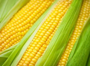 видеть кукурузу сонник
