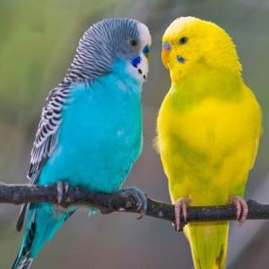 К чему снятся попугаи в клетке: сонник новые фото