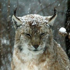 Белый сонник – трактование снов с животными