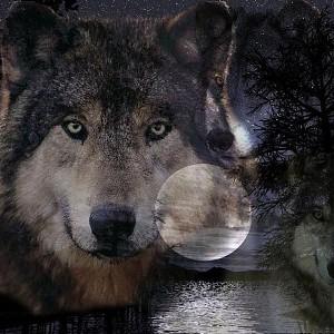 Большие оборотни и собаки – что предвещает сон