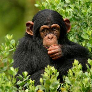 Что означает убить обезьяну в кошмаре