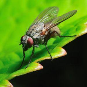 Если насекомое привиделось в глазу