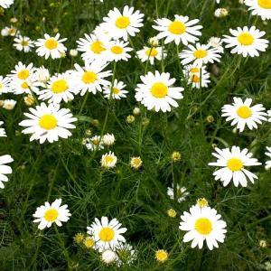 Если цветы привиделись на грядке или клумбе