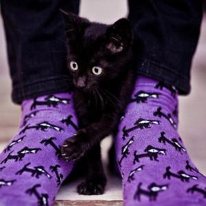 Если вам приснились белые или черные носки