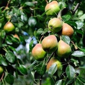 Рассмотрим к чему снится сад с разнообразными фруктами и ягодами что говорит сонник?
