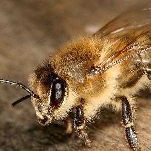 К чему видеть насекомое которое кусает