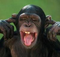 Узнаем к чему снится злая обезьяна женщине и что по этому поводу говорят толкования сонника?