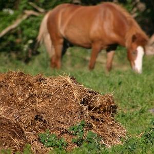 Увидеть лошадиный навоз с червями