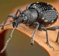 Сонник – к чему снится маленькое насекомое и чего стоит опасаться сновидцу в недалеком будущем?