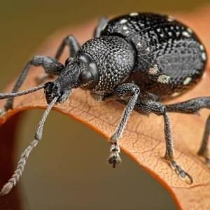 Увидеть насекомое в доме