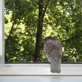 пернатый друг залетел в окно