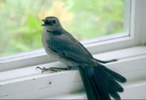 что означает когда птица в окно залетела