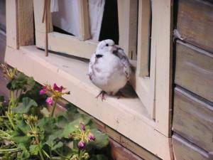 что означает птица ударилась в окно