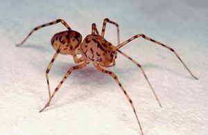 что означает увидеть паука вечером
