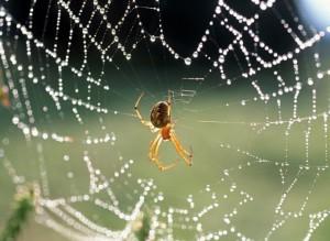 нельзя убивать паука