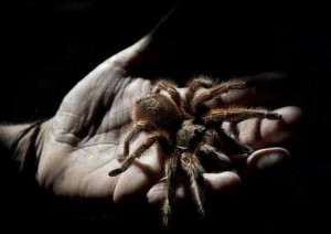 паук на ладони