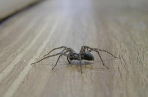 паук на полу
