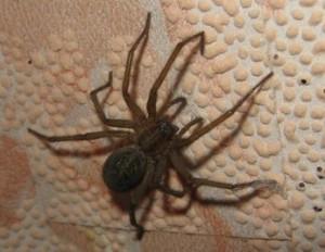паук на стене