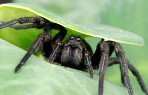 паук под листом
