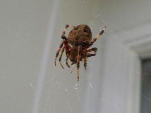 паук сплел паутину