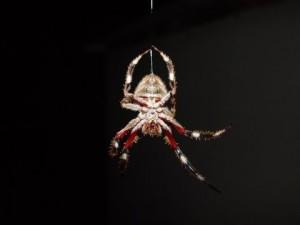 паук спускает на паутине