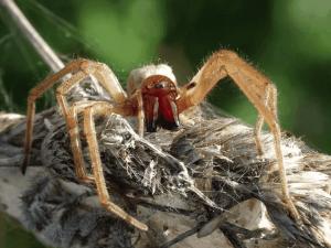 паук в доме