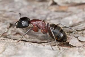 примета появление муравьев