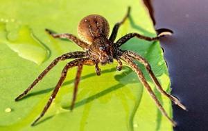 примета про паука