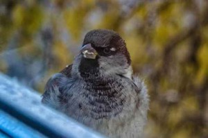 примета птица залетела