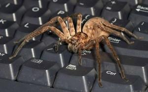 приметы про паука