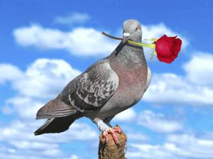 птица накакала на голову или на одежду примета