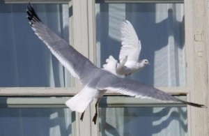 птица ударилась или врезалась в окно
