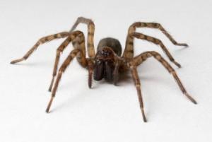 суеверия про пауков