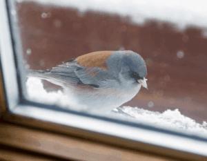 в окно постучалась птичка