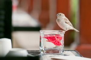 залетевшая в окно птица
