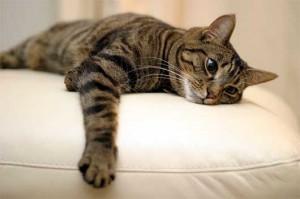кошка на диване
