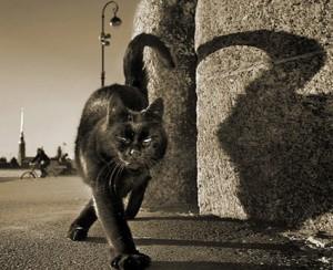 приметы про кошку