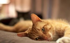 Приметы про кошку в доме, связанные с погодой, прибавлением в семействе