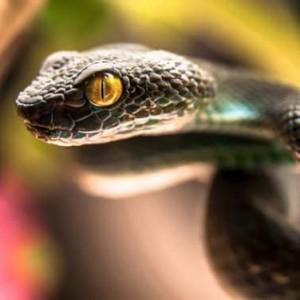 Описание чертога Змея