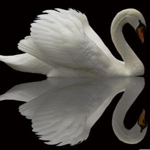 Чертог Лебедя: славянский гороскоп и оберег