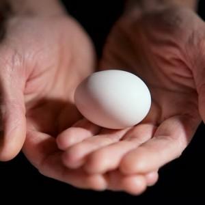 При помощи яйца
